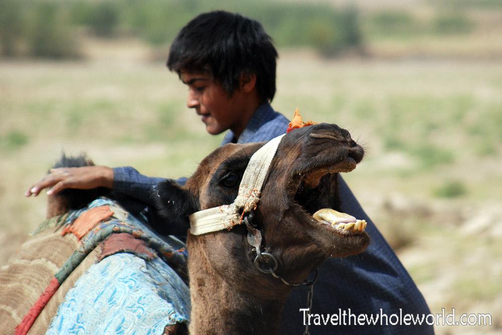 Afghanistan Camel Mad