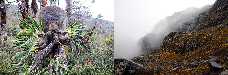 Carstensz-Highlands
