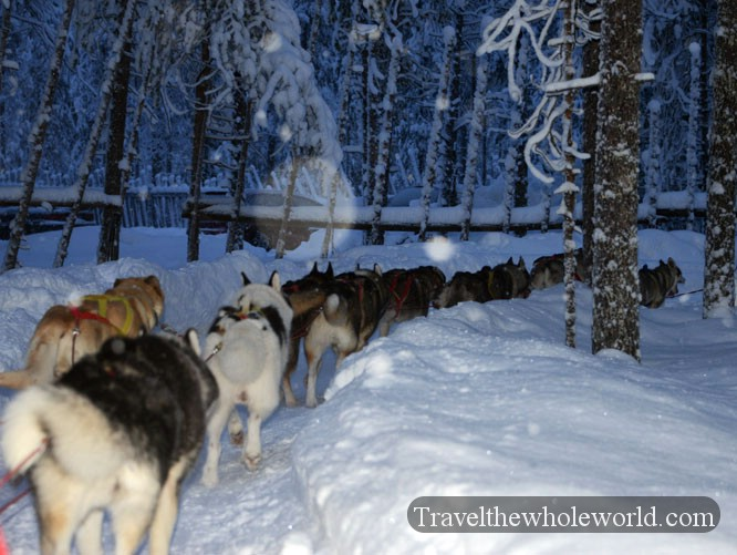 Huskies Pulling Sled Arctic Sled Dogs Huskies