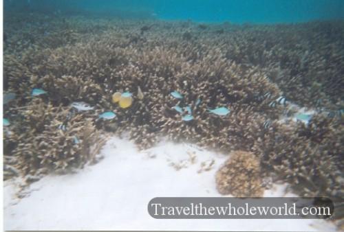 Guam Ocean Coral