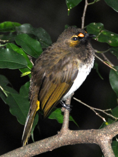 Hong Kong Park Bird