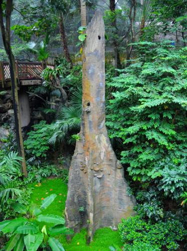 Hong Kong Park Tree