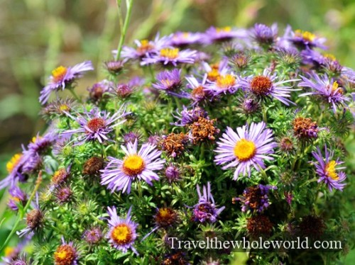 Iowa-Neal-Smith-Wildlife-Flowers