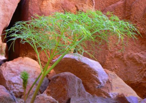 Jordan Petra Plant
