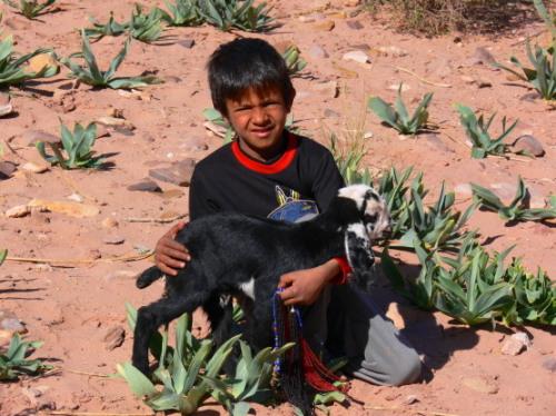 Jordan Petra Boy Lamb