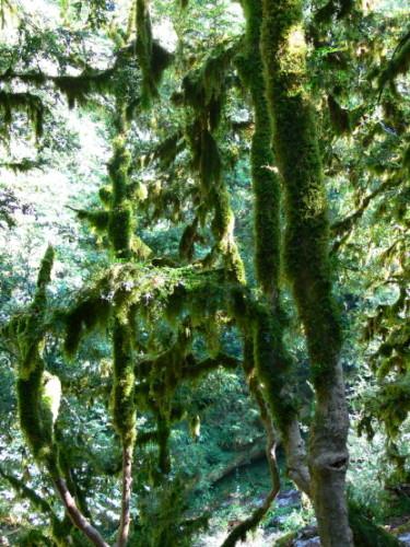 Russia Sochi Moss Forest
