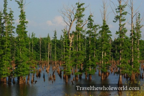 Tennessee_Swamp2