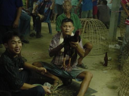 Thailand Chicken Fight