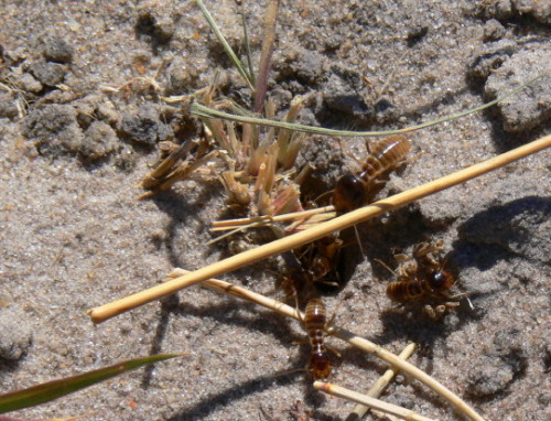 Botswana Termites