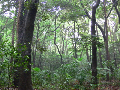 Japan Meija Jinku Forest