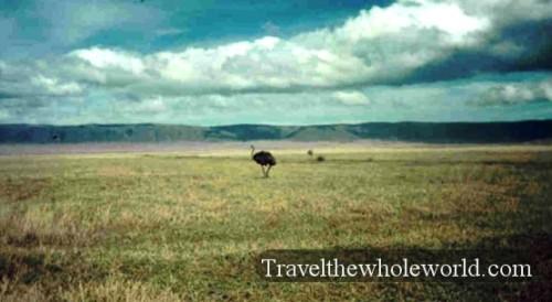 Tanzania Ostrich