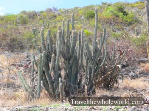 Puerto Rico Guanica Cactus