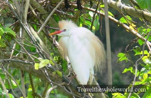 Puerto_Rico_White_Bird