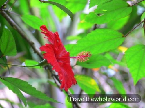 Puerto Rico El Yunque Flower