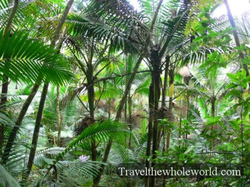 Puerto Rico Yunque Forest
