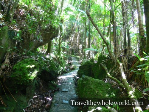Puerto Rico Yunque Hiking Trail