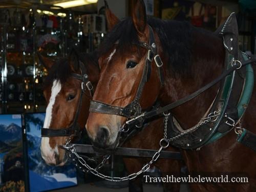 Germany Neuschwanstein Castle Horses