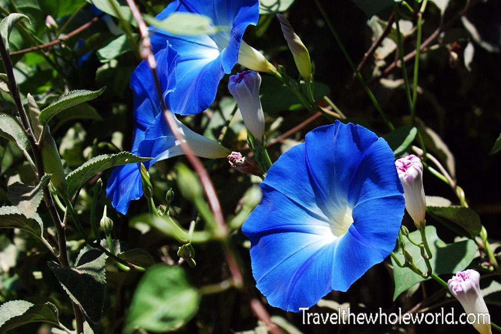 Afghanistan Istalif Flower