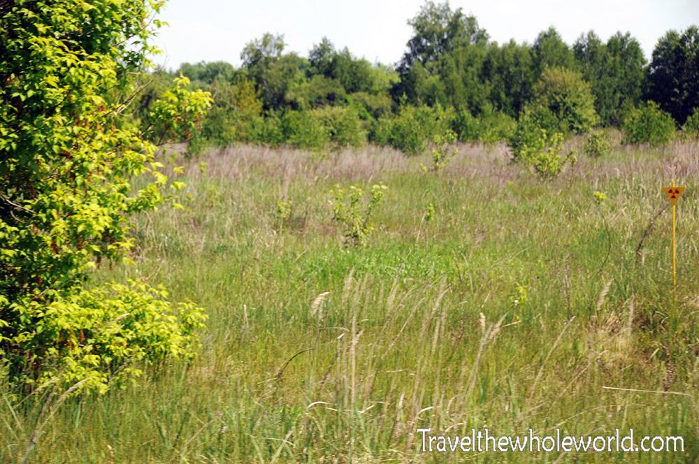 Chernobyl Grass