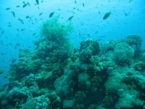 Egypt Red Sea Coral