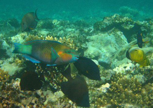 Egypt Red Sea Fishes