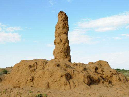 Somalia Massive Termite Mound