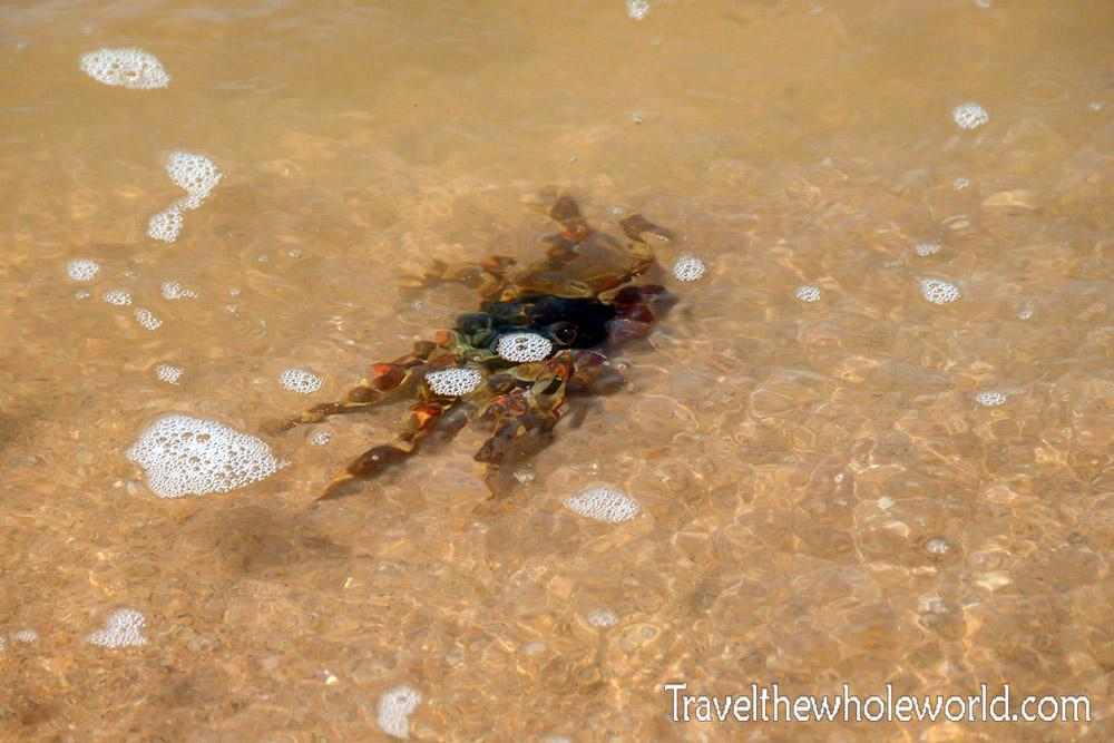 Africa Crab