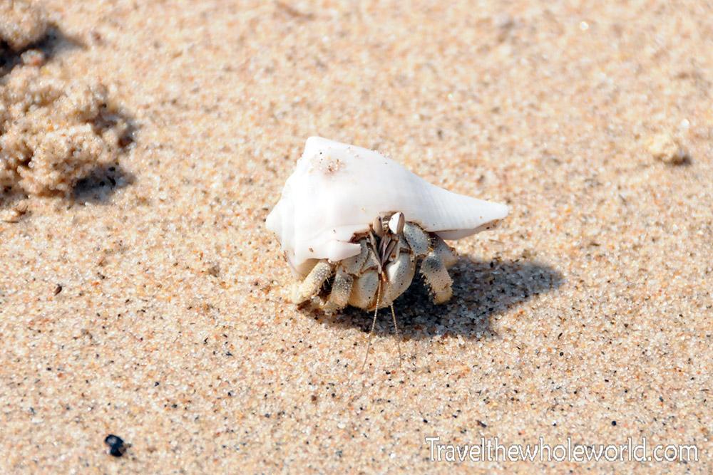 Africa Hermit Crab