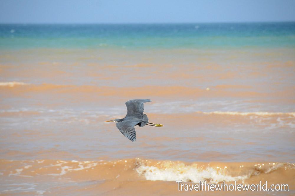 Somalia Blue Heron