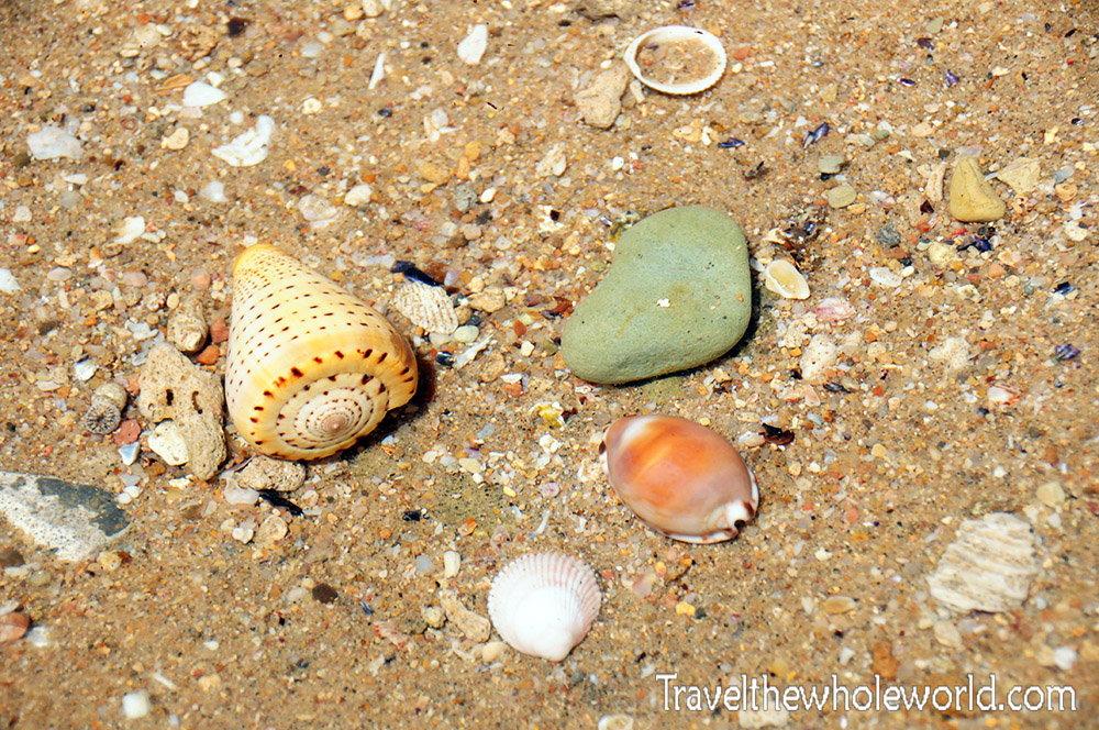 Somalia Berbera Coast Seashells
