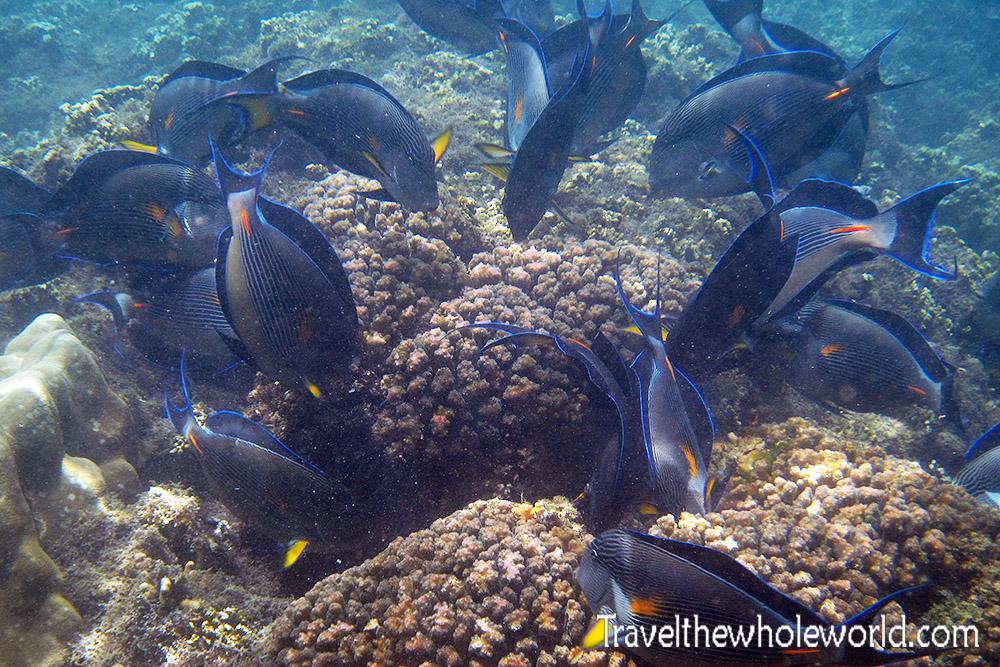 Somalia Fish Feeding Frenzy