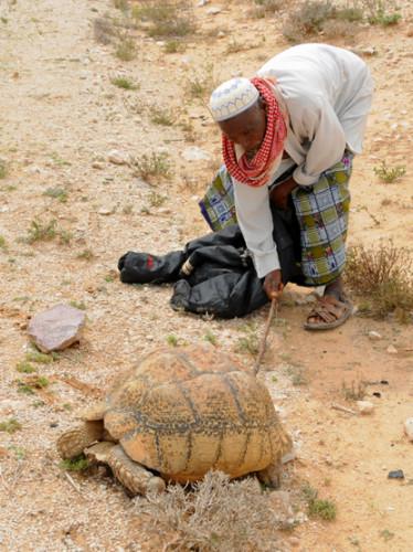 Somalia Tortoise Man