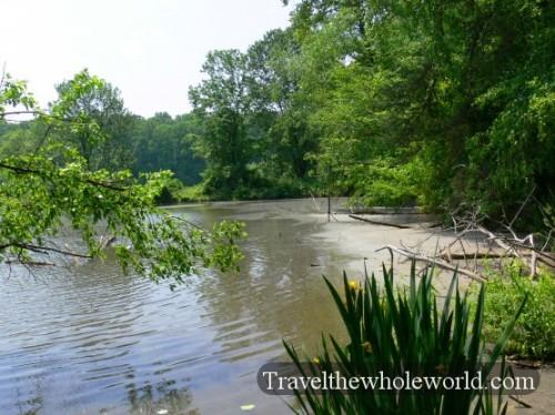 USA_Virginia_Swamp2