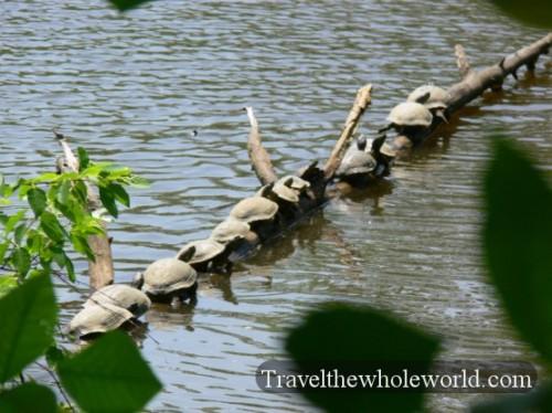 USA_Virginia_Turtles