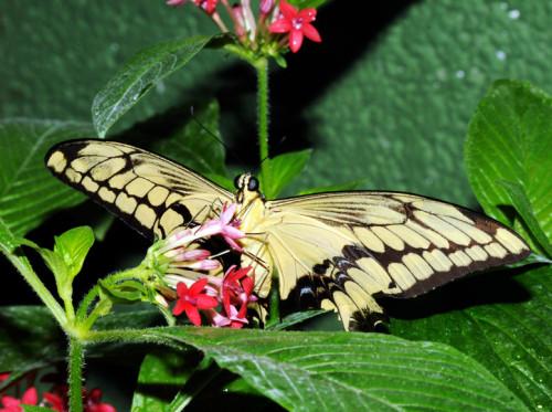 Natural Bridge Butterflies