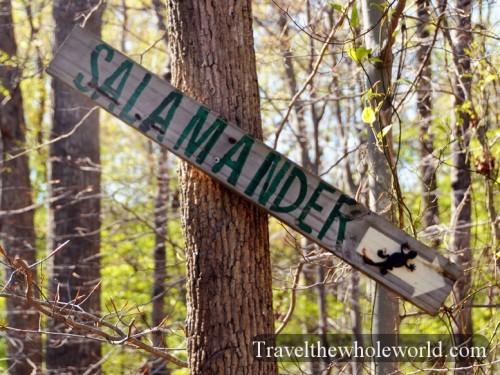 Virginia-Springfield-Biking-Salamander-Trail