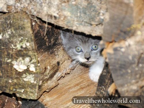 Virginia-Springfield-Feral-Cat