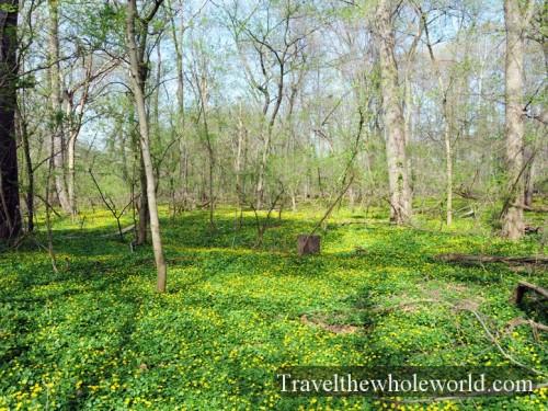 Virginia-Springfield-Spring