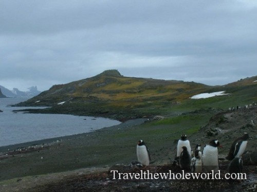 Antarctica South Shetland Islands
