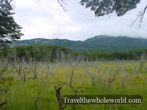 Argentina Tierra Del Fuego Dead Trees