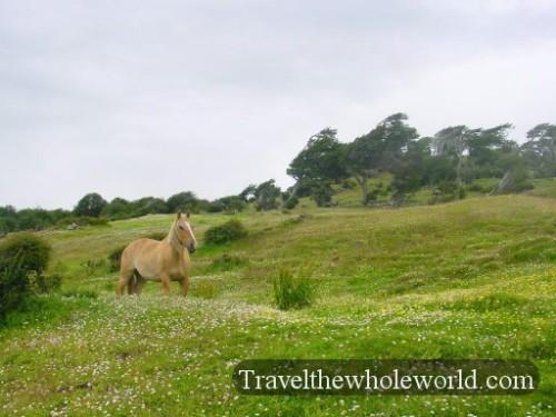 Argentina Ushuaia Horse