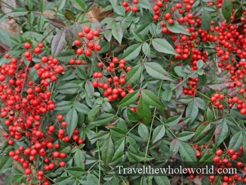 Arkansas Hot Springs Berries