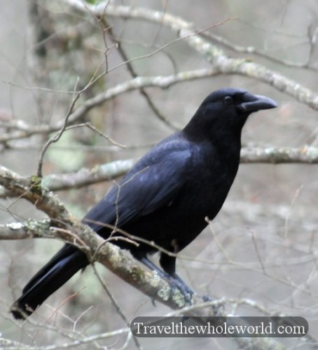 Arkansas Lake Ouachita Crow