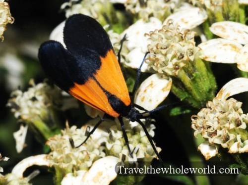 Arkansas Ozarks Bug