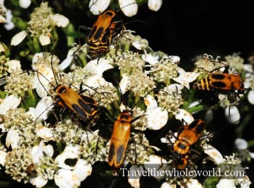 Arkansas Ozarks Bugs