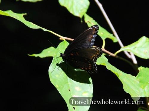 Arkansas Ozarks Butterfly