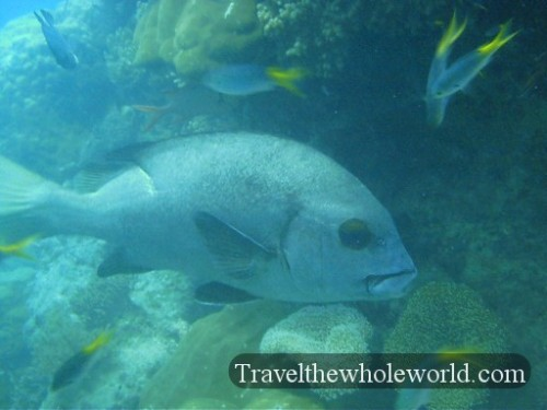 Australia-GBR-Black-Eyed-Fish