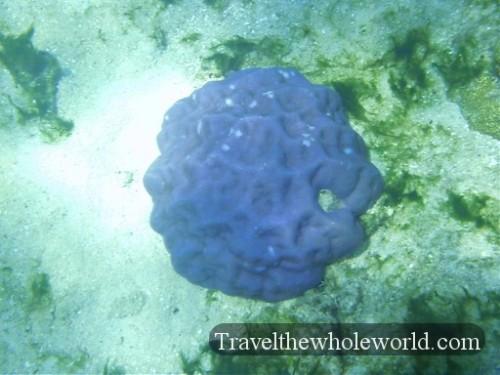 Australia-GBR-Blue-Coral