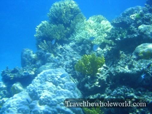 Australia-GBR-Corals