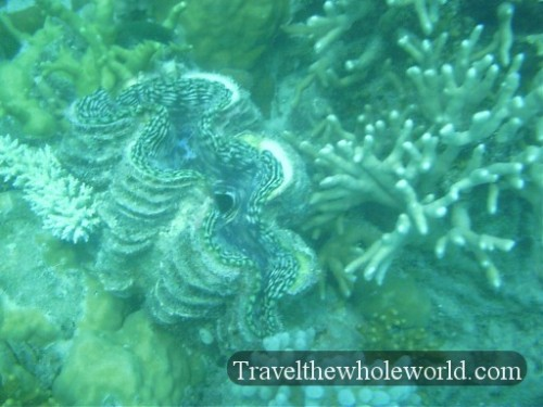 Australia-GBR-Giant-Clam